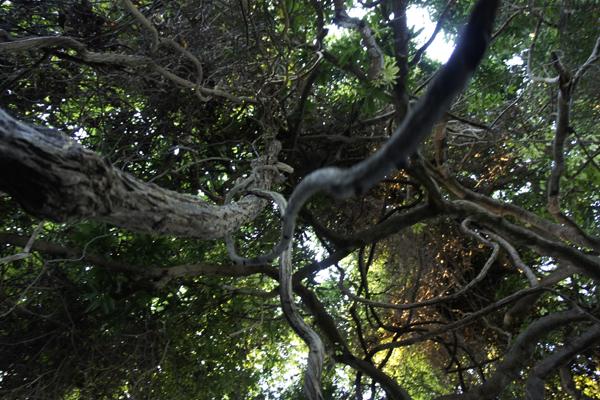 Ngezi Forest flying fox owl monkeys bush baby