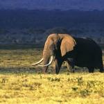 Tanzanian safari Serengeti Ngorongoro