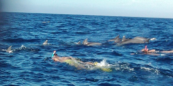 Dolphin tour, swim with humpback and bottleneck dolphins