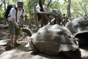 Prison Island giant tortoise