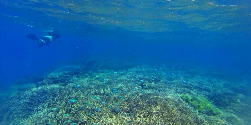 Snorkel with sea turtles at Chumbe Island